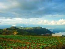 Αγρόκτημα λάχανων στο βερκέλιο σκαφών Phu Στοκ φωτογραφία με δικαίωμα ελεύθερης χρήσης
