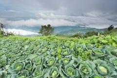 Αγρόκτημα λάχανων στο mountaion, τοποθετημένο Phu Tubburk Στοκ Φωτογραφία