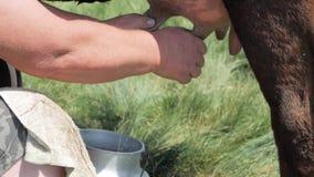 Αγρόκτημα αγελάδων υπαίθρια απόθεμα βίντεο