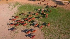 Αγρόκτημα αλόγων πολλά άλογα που βόσκουν στο αγρόκτημα φιλμ μικρού μήκους