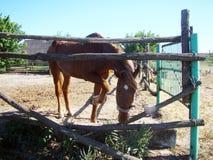 Αγρόκτημα αλόγων στοκ εικόνες με δικαίωμα ελεύθερης χρήσης