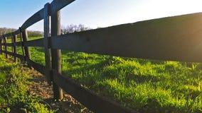 Αγρόκτημα αλόγων Bluegrass απόθεμα βίντεο