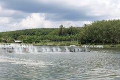 Αγρόκτημα γαρίδων σε Satul, Ταϊλάνδη Στοκ Φωτογραφίες