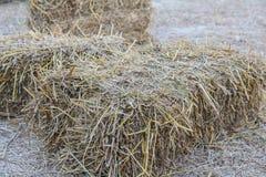 Αγρόκτημα γεωργίας και σύμβολο καλλιέργειας του χρόνου συγκομιδών με το ξηρό γ Στοκ Εικόνες