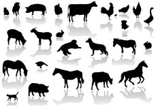 αγρόκτημα ζώων Στοκ εικόνα με δικαίωμα ελεύθερης χρήσης