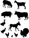 αγρόκτημα ζώων ελεύθερη απεικόνιση δικαιώματος
