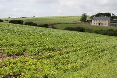 αγρόκτημα ιρλανδικά λάχαν&ome Στοκ Εικόνες
