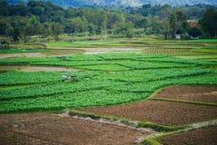 Αγρόκτημα και Ricefield καλαμποκιού Στοκ φωτογραφία με δικαίωμα ελεύθερης χρήσης