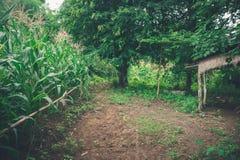 Αγρόκτημα καλαμποκιού και παλαιό ξύλινο σπίτι στοκ φωτογραφία
