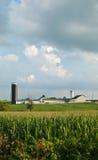 αγρόκτημα καλαμποκιού στοκ φωτογραφία