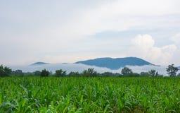 Αγρόκτημα καλαμποκιού στοκ εικόνα με δικαίωμα ελεύθερης χρήσης