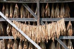 Αγρόκτημα καπνών Στοκ Φωτογραφίες
