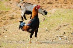 αγρόκτημα κοτόπουλου που ενσωματώνεται κοντά στο ρεύμα πουλερικών στοκ εικόνες