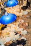Αγρόκτημα κοτόπουλου. Στοκ φωτογραφίες με δικαίωμα ελεύθερης χρήσης