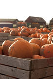 Αγρόκτημα κολοκύθας στο χρόνο συγκομιδών Στοκ Φωτογραφίες