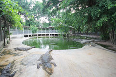 Αγρόκτημα κροκοδείλων και ζωολογικός κήπος, αγρόκτημα Ταϊλάνδη κροκοδείλων Στοκ Εικόνες