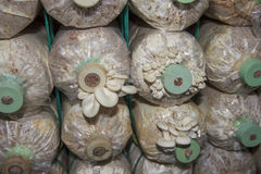 Αγρόκτημα μανιταριών Στοκ εικόνες με δικαίωμα ελεύθερης χρήσης
