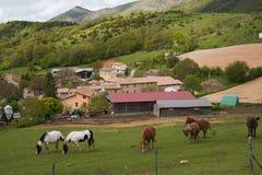 Αγρόκτημα με τα άλογα Στοκ Εικόνα