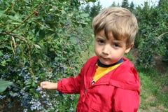 Αγρόκτημα μούρων Στοκ εικόνες με δικαίωμα ελεύθερης χρήσης
