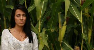 Αγρόκτημα οικολογίας - τομέας καλαμποκιού απόθεμα βίντεο