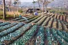 αγρόκτημα οργανικό Στοκ Εικόνες
