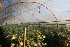 Αγρόκτημα λουλουδιών Στοκ εικόνες με δικαίωμα ελεύθερης χρήσης