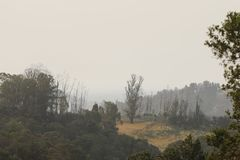 Αγρόκτημα περιφερειακή Καλιφόρνια Shiloh Το πάρκο περιλαμβάνει τις δρύινες δασώδεις περιοχές, δάση μικτός evergreens στοκ φωτογραφία με δικαίωμα ελεύθερης χρήσης