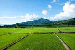 Αγρόκτημα ρυζιού της Ταϊλάνδης Στοκ φωτογραφία με δικαίωμα ελεύθερης χρήσης