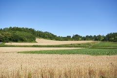 Αγρόκτημα σίτου γεωργίας στο Hokkaido Ιαπωνία Στοκ εικόνες με δικαίωμα ελεύθερης χρήσης