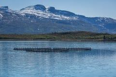 Αγρόκτημα σολομών στη Νορβηγία Στοκ Φωτογραφίες