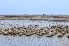Αγρόκτημα στρειδιών στην παραλία Ταϊλάνδη sila ANG Στοκ φωτογραφία με δικαίωμα ελεύθερης χρήσης