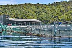 Αγρόκτημα στρειδιών Picton Στοκ Εικόνες