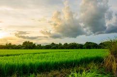 Αγρόκτημα Ταϊλανδού Στοκ φωτογραφίες με δικαίωμα ελεύθερης χρήσης