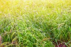 Αγρόκτημα Ταϊλανδού Στοκ Εικόνες