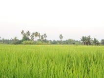 Αγρόκτημα Ταϊλανδού Στοκ εικόνες με δικαίωμα ελεύθερης χρήσης