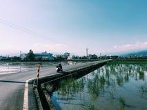 Αγρόκτημα της Ταϊβάν Στοκ φωτογραφίες με δικαίωμα ελεύθερης χρήσης