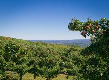 Αγρόκτημα της Apple στο λόφο που αγνοεί την κοιλάδα του Hudson Στοκ Εικόνα