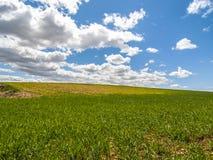 Αγρόκτημα, τομέας συγκομιδών. τοπίο με την πράσινη χλόη. Γεωργία της Ισπανίας. Στοκ εικόνες με δικαίωμα ελεύθερης χρήσης