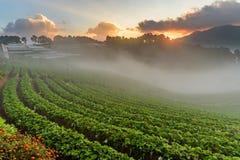 Αγρόκτημα φραουλών σε Doi Angkhang, Chiangmai Στοκ φωτογραφία με δικαίωμα ελεύθερης χρήσης