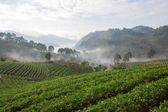 Αγρόκτημα φραουλών στοκ εικόνες με δικαίωμα ελεύθερης χρήσης