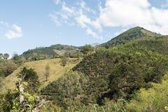 Αγρόκτημα φυτειών καφέ της Κόστα Ρίκα Στοκ Φωτογραφία