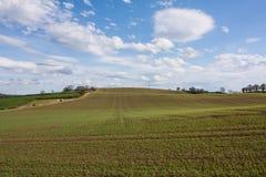 Αγρόκτημα χλόης Στοκ Εικόνες