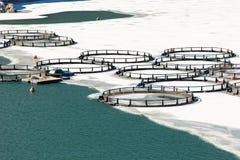 Αγρόκτημα ψαριών στην παγωμένη λίμνη Στοκ Φωτογραφία