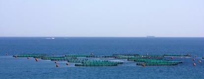 Αγρόκτημα ψαριών στη θάλασσα στοκ φωτογραφίες με δικαίωμα ελεύθερης χρήσης
