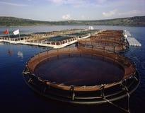 Αγρόκτημα ψαριών Στοκ εικόνες με δικαίωμα ελεύθερης χρήσης