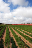 αγρόκτημα Στοκ εικόνες με δικαίωμα ελεύθερης χρήσης