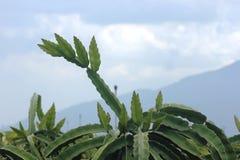 Αγρόκτημα Amavie στοκ εικόνα