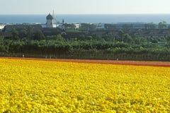 Αγρόκτημα Carlsbad, βατράχιο, Σαν Ντιέγκο, ασβέστιο Στοκ Φωτογραφία