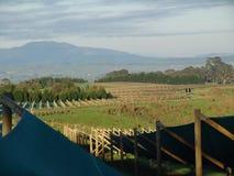 Αγρόκτημα Ginseng με την προστατευτική σκιά στοκ εικόνα