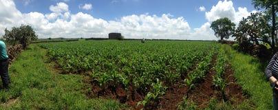 Αγρόκτημα México Στοκ Εικόνες